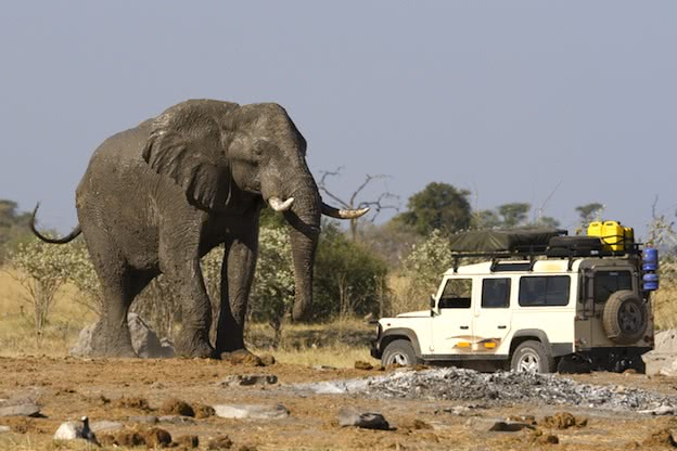 Africa's largest - African elephant