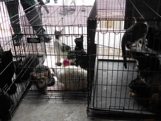Cats recovered in Merritt Island