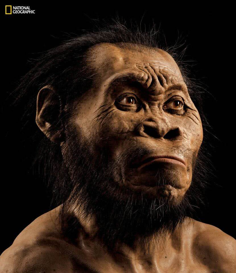 Homo naledi vs Stor-Age Self Storage