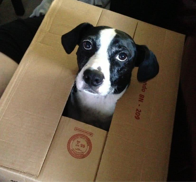 Dog in a storage box